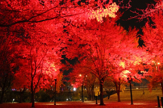 Renaud Park in Joliette, Quebec will be lighting up red each night between now and January to promote Project Red Ribbon and sober driving this holiday season. (Photo credit: Marie Claude Morin)