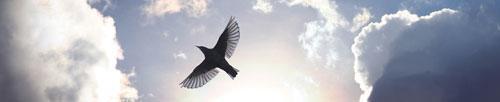Oiseau et nuages